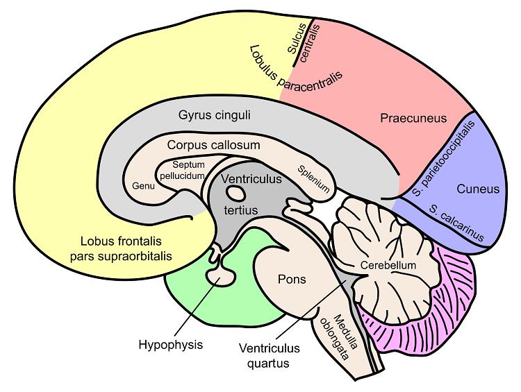 braintips